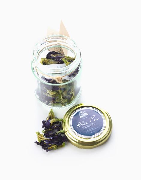 Organic Blue Pea (Blue Ternatea) Flower Tea by Milea