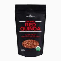 Quinoa red