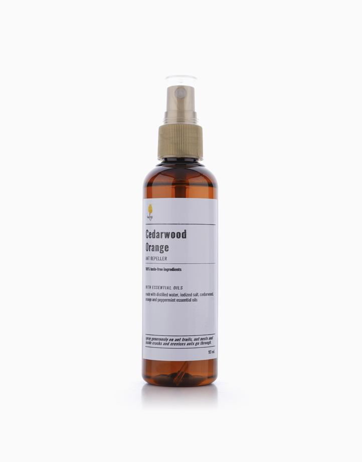 Cedarwood Orange Ant Spray (97ml) by Calyx Life & Home