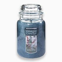 Eucalyptus Large Jar Candle by Yankee Candle