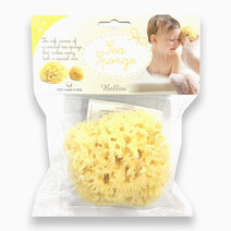 Honeycomb Bath Sponge Medium No. 12 by Bellini