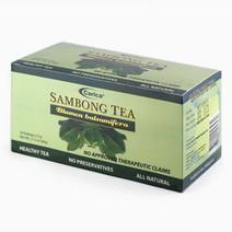 Carica sambong tea